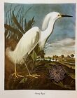 Vtg 1980's Audubon Art Print Full Color Lithograph WATER BIRD *** SEE VARIETY