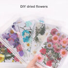 Внешний вид - Pressed Flower Mixed Organic Natural Dried Flowers DIY Art Floral Decors Gifts