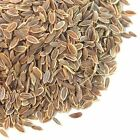 Bulk Dill Seed   Anethum Graveolens Seeds   Spice Jungle