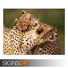 AFFECTIONATE CHEETAHS (3767) Animal Poster - Photo Poster Print Art * All Sizes