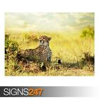 CHEETAH SAVANNA AFRICA (3476) Animal Poster - Poster Print Art A0 A1 A2 A3 A4