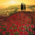36W*x36H* POPPY FIELDS by STEVE THOMS - HILL SPRUCE SUNRISE - CHOICES of CANVAS