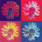 """36W""""x36H"""" DAISY, 1982 (BLUE PINK RED YELLOW) by ANDY WARHOL - CHOICES of CANVAS"""