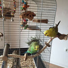 JW Pet Bird Parrot Wooden Rope Climbing Hanging Cage Ladder Stand Perch Chew
