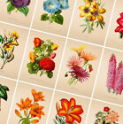 Flower Posters Vintage Prints - Botanical Poster - Gift Wall Art Home Decor