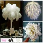 Beautiful Natural White Ostrich Feather Q4r6 X2n2 N8d8