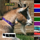NEW! TRADITIONAL GOAT COLLAR with CHROME BUCKLE in 9 COLOURS