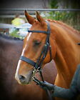 FSS German Leather Traditional English Working Hunter Show Hunt Bridle Wide 3/4""