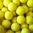 Yellow  CPX Flavoured Pop ups Boilies for Carp Coarse Fishing