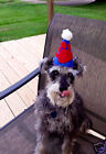 Small Pet  Cat Dog Party Birthday hat Felt Personalized