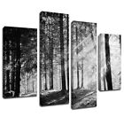 MSC379 Black White Forest Sun Shine Canvas Art Multi Panel Split Picture Print