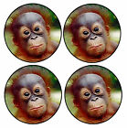 BABY ORANGUTAN - SET OF NOVELTY FUN COASTERS - SETS OF 4, 6 OR 8 - XMAS