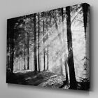 C379 Black White Forest Sun Shine Canvas Art Ready to Hang Picture Print
