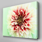 AB081 Dahlia Flower Red & White Canvas Wall Art Ready to Hang Picture Print
