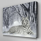 A047 White Tiger Snow Forest Canvas Art Ready to Hang Picture Print