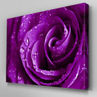 FL214 Purple Rose Floral Canvas Wall Art Multi Panel Split Picture Print
