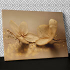 FL409 Two Orchids Gold Dust Canvas Wall Art Ready to Hang Floral Picture Print