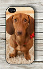 Dog Dachshund close up #8 CASE FOR iPHONE 4 , 5 , 5c , 6 -psd2Z