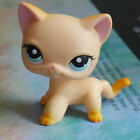 """LPS COLLECTION LITTLEST PET SHOP short hair cat kitty  RARE TOY 2""""  #339"""