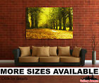 Wall Art Canvas Picture Print - Alley Foliage Autumn Trees Leafs 3.2