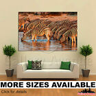 Wall Art Canvas Picture Print - Zebra Drinking Water at Sunset 3.2