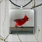 BIRD RED CARDINAL SINGING PENDANT NECKLACE 3 SIZES CHOICE -jdf4Z