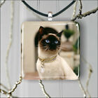 CAT SIAMESE COLD COLLAR PENDANT NECKLACE 3 SIZES CHOICE -dhb6Z