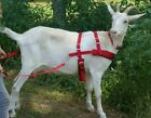 Goat Pulling Harness USA Made Heavy Duty Lined 9 colors Carter Pet Supply