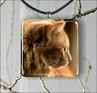 CAT GINGER TABBY PENDANT NECKLACE 3 SIZES CHOICE -jgh6Z