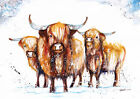 Original Watercolour Highland Cows Print by Artist Be Coventry wildlife art