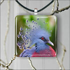 BIRD PIGEON VICTORIA CROWNED SQUARE PENDANTS NECKLACE MEDIUM OR LARGE -fsu6X