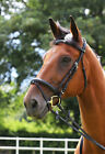 Gallop Comfort Bridle + Rubber Reins All sizes Free P&0
