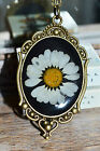 Real Daisy Necklace in Resin in oval bronze setting - Handmade Flower Jewellery