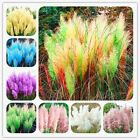 500 Pcs / Bag Colorful Pampas Grass Cortaderia Seeds Are Very Beautiful Garden P