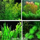 500 pcs Aquarium Seeds/pack Plants fish tank aquarium decoration Grass seed plan