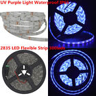 5m/16ft SMD2835 LED Flexible Strip 300leds Waterproof IP65 (UV Purple Light)