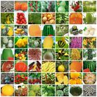 VARIETIES melon vegetable fruit Seeds Heirloom NON-GMO Top Quality 061-118