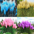 1000Pcs Pampas Grass Selloana Flower Rare Reed Seeds Garden Plant Flowery