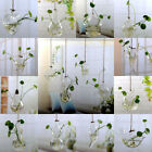 Home Garden Clear Glass Flower Hanging Vase Planter Terrarium Container Hot