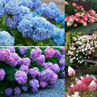 New 30pcs Adorable Plant Seeds Fragrant Blooms Strawberry Hydrangea Seeds KM