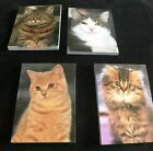 """Magnetic writing pad:Tabby, Persian Cross,Maine Coon & Cream cat pads of 50,3X4"""""""