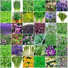 VARIETIES Herb Seeds Heirloom NON-GMO Top Quality Everything you need is here