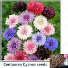 100pcs/Cornflower(Centaurea Cyanus)Seeds 6 color Centaurea cyanus Flower for Hom
