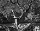 Early Morning, Merced River by Ansel Adams