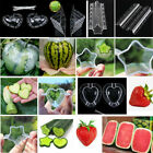 US 1-10x Garden Orchard Fruit Vegetable Growing Mold Cute Customized Mould Tool