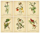VINTAGE ART PRINTS 8x10'' Birds Botanical Poster Set Picture Wall Decor Book