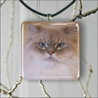 CAT AMERICAN LONG HAIR BREED PENDANT NECKLACE 3 SIZES CHOICE -red3X