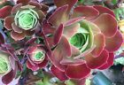 Create Your Own Succulent Assortment