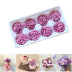 8PCS/Box 100% Fresh Flowers Preserved Carnation Dried Flower Home Floral Décor