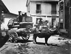 """Transportation of Army supplies by """"Caraboo"""" (Water ox cart)War & Conflict"""